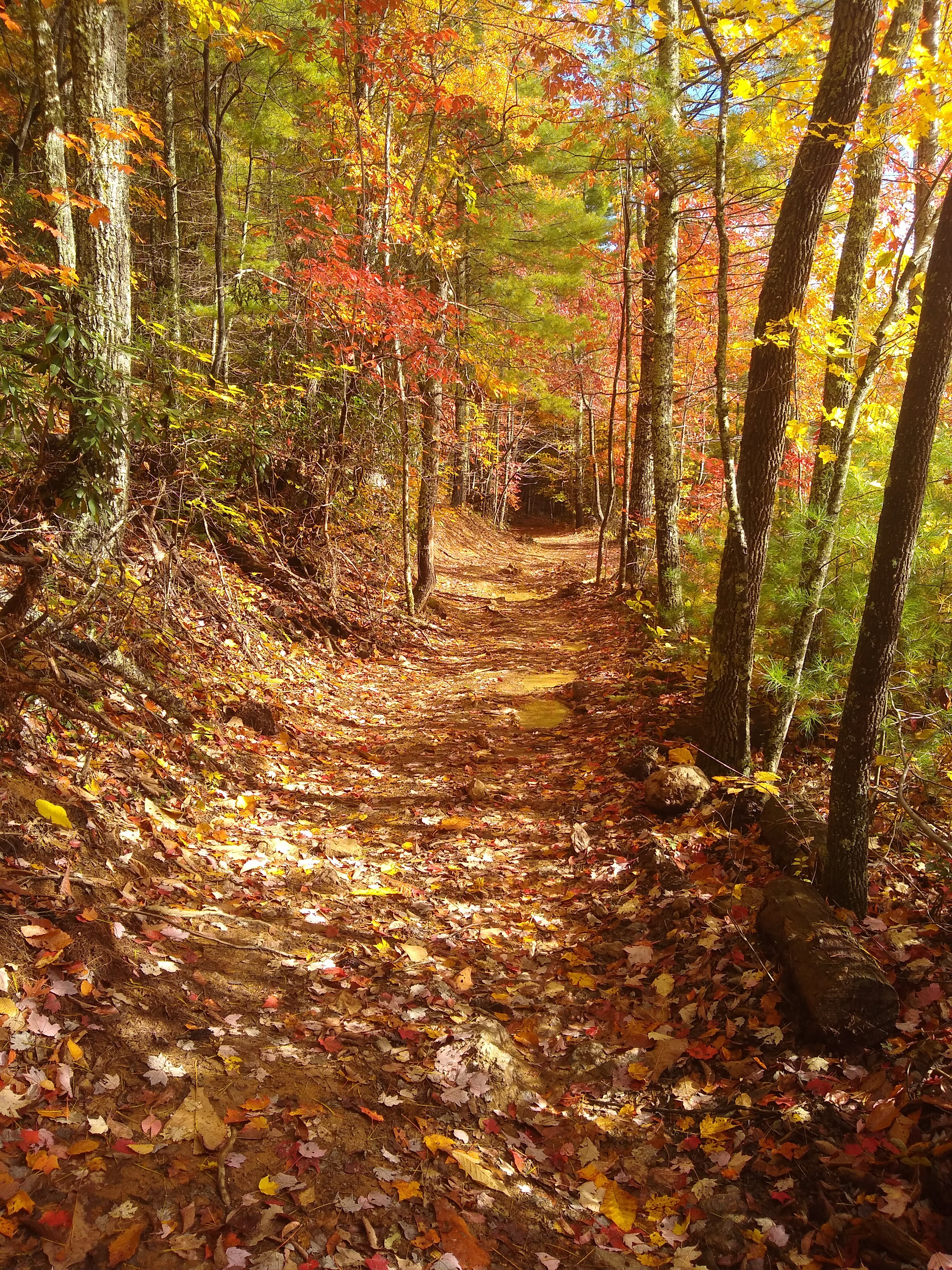 Trail-in-the-Fall